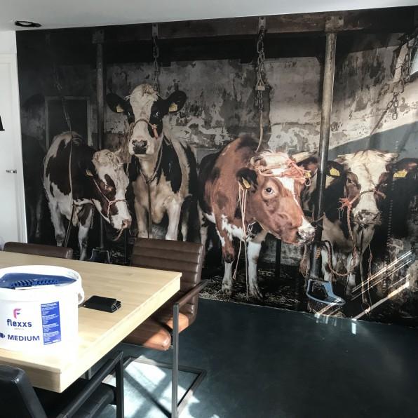 Behang met koeien