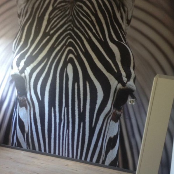 Behang met zebra close-up