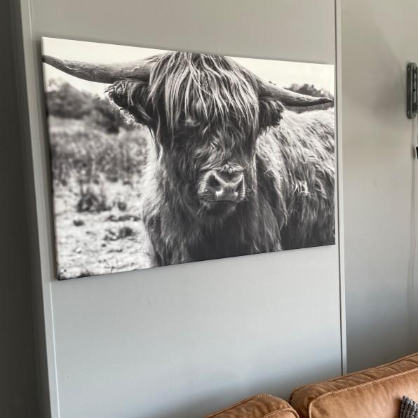 Canvas Schotse Hooglander