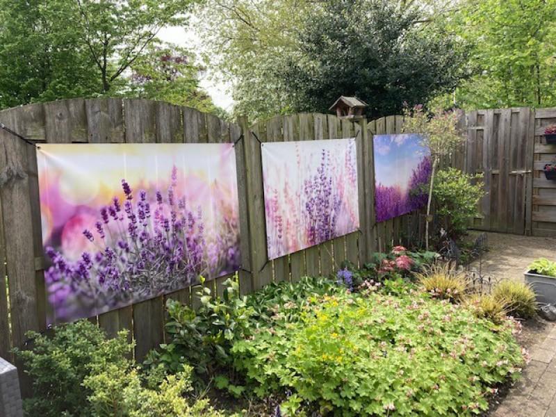 Lavendel Tuinposters