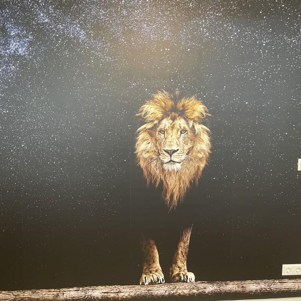 Behang met leeuw en sterren