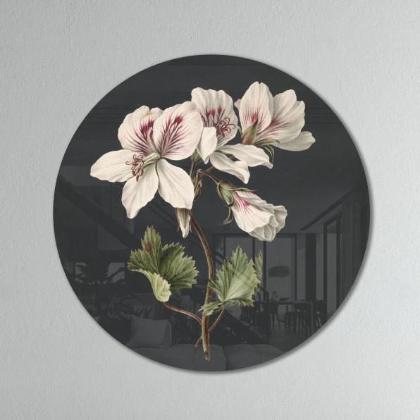 Muurcirkel met Pelargonium