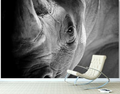 A Rhino Ready to Charge