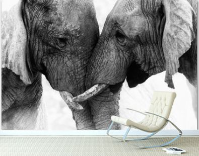 Elephant Touch