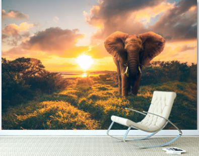 an elephant by the sea in sunrise. a Photoshop creation On the beach of Mauritius there is a Kenyan element in the grass and sunrice