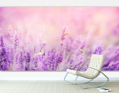 Banner purple lavender field with butterflies and bees at sunset. Copy space
