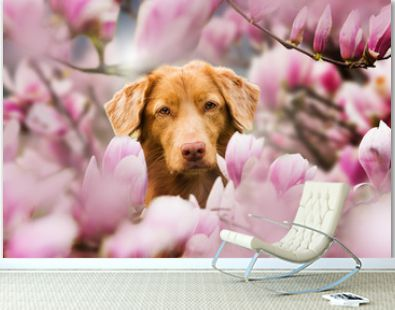 Dog under a magnolia tree