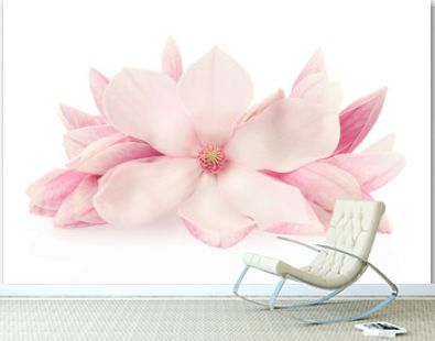 Magnolia, pink spring flowers and buds on white, clipping path