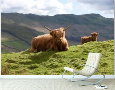 The Mystery Of The Highland Cattle