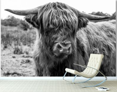 Highlander close up in black and white photography