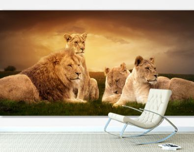 African lions resting in the green grass.