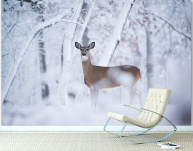 A white tail deer look at the camera in snow covered landscape