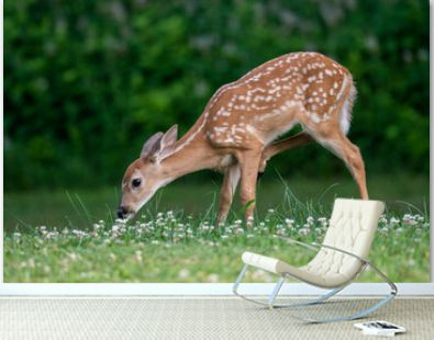 Whitetailed deer fawn in an open meadow i nth esummer