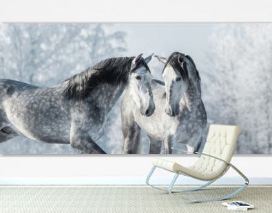 Two thoroughbred gray horses in winter forest.