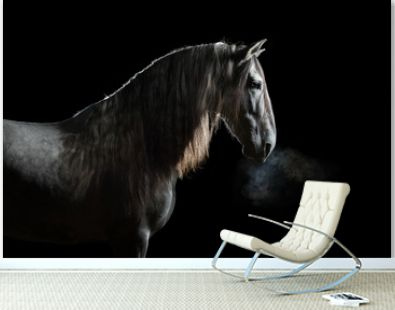 Silhouette of a gray Andalusian horse with long mane and steam from nostrils isolated on black background