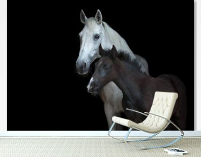 Arabian mare with a foal isolated on black background.