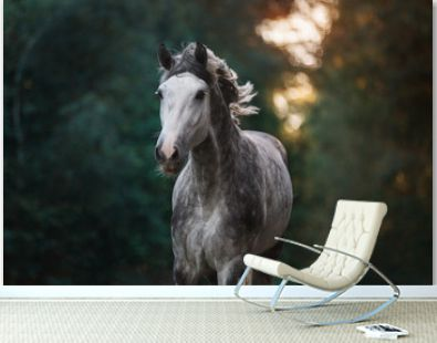 Portrait of a beautiful grey arabian horse in the forest.