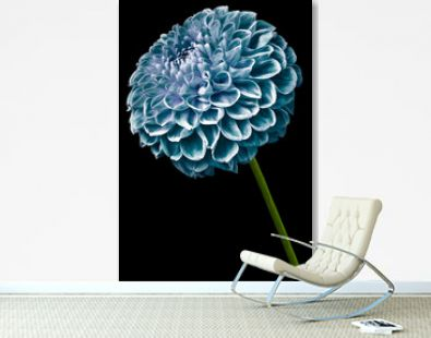 flower isolated turquoise dahlia on the black background. Flower on the stem. Closeup. Nature.
