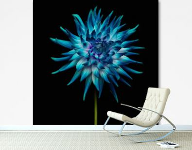 blue flower on black background