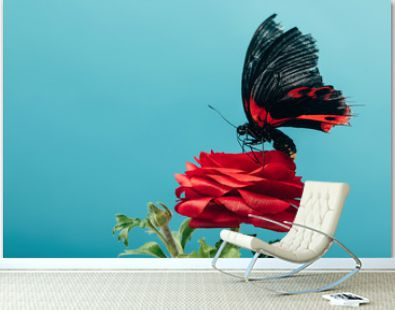 close up view of beautiful butterfly on red rose isolated on blue