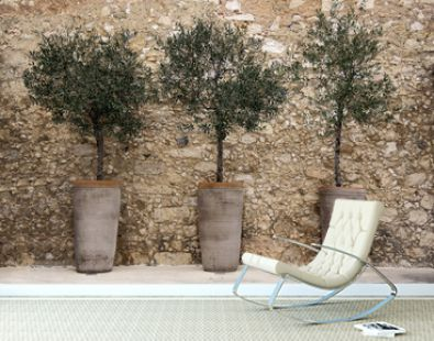 Olive trees in pots against a stone wall Crete