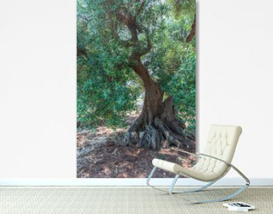 Ancient olive trees tell the story of our land. Puglia, Italy.