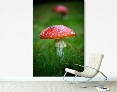 Red toadstool growing in field of green grass