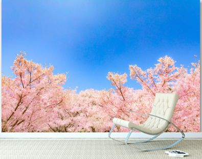 Cloud, Cherry blossoms, Tree