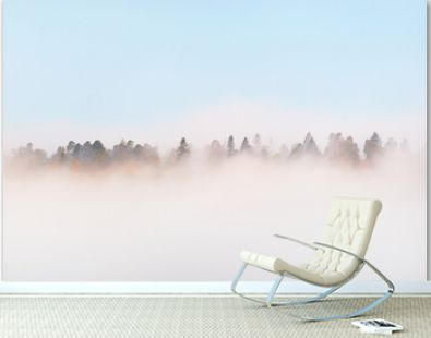 Gauja river valley and pine forest in a clouds of mysterious morning fog at sunrise, fir trees close-up. Sigulda, Latvia. Breathtaking panoramic aerial view. Pure nature, environment, eco tourism