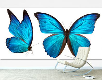 beautiful butterfly isolated on white