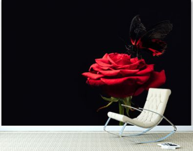 close up view of beautiful butterfly on red rose isolated on black