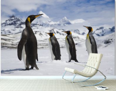 One king penguin watches as three king penguins walk past in the snow in front of the mountains of South Georgia Island