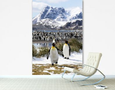 Two king penguins are in the foreground in front of their colony on Salisbury Plain on South Georgia in Antarctica