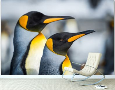 Close-up of two king penguins looking ahead