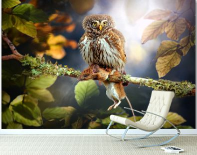Small owl in deep magic forest. The Eurasian pygmy owl with mouse. Glaucidium passerinum