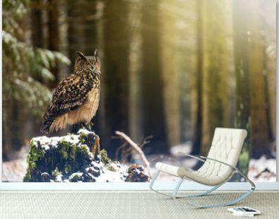 Brown owl is posing on the old stump in the snowy forest. Horizontally.