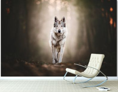 Wolfdog portrait in natural environment in a wood