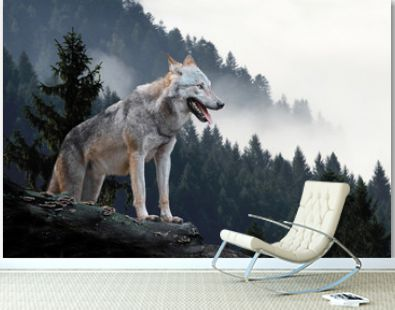 Wolf in mountains