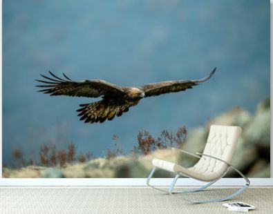 Goldean Eagle (Aquila chrysaetos) at mountain meadow in Eastern Rhodopes, Bulgaria