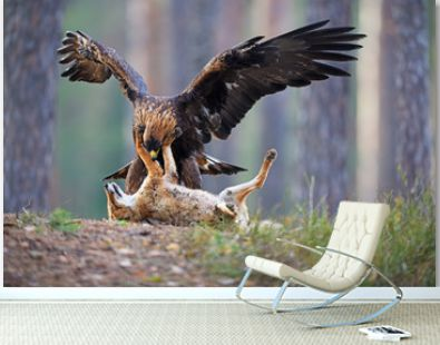 Golden Eagle with hunted fox