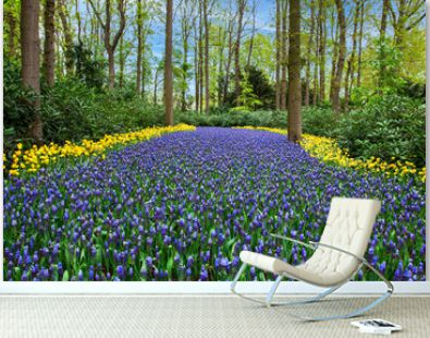 A huge bed of hyacinths, edged with yellow tulips. Beautiful spring scenery.
