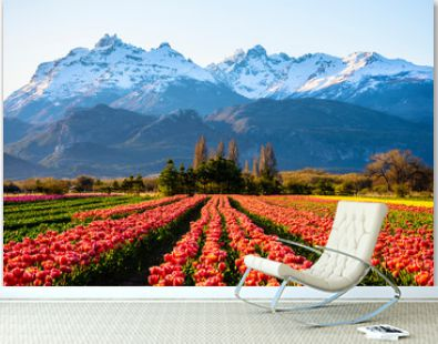 Scene view of field of tulips against snow-capped Andes mountains and clear sky in Trevelin, Patagonia, Argentina