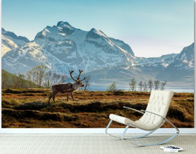 A reindeer on a background of the mountains