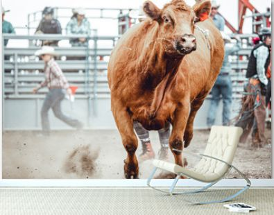 Bowden, Alberta, Canada, 26 July 2019 / Moments from the Bowden Daze, the town's rodeo. Cow riding, wild cow running around