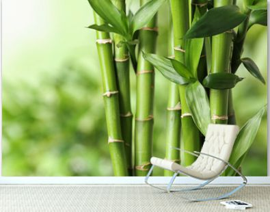 Beautiful green bamboo stems on blurred background