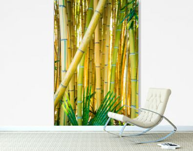 Bamboo forest. Natural background. bamboo plant