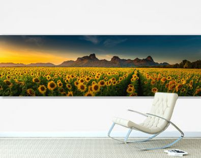 Panorama landscape of sunflowers blooming in the field., Beautiful scene of agriculture farming on mountain range background at sunset., Plantation of crop organic farm and countryside traveling.