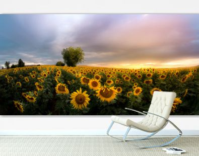 incredible sunset with a nice sunflower field landscape