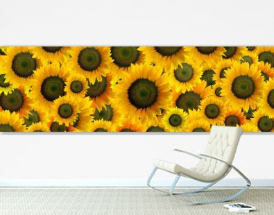 High resolution panoramic photomontage of individually colour graded Sunflowers