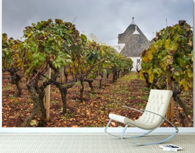 vineyard bushes and old house trulli in Puglia region in Italy